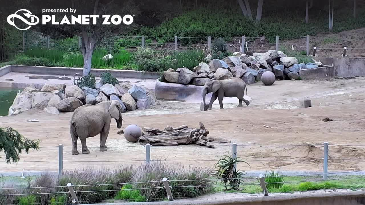 Webcam San Diego Wild Animal Park Elephants Live webcamera