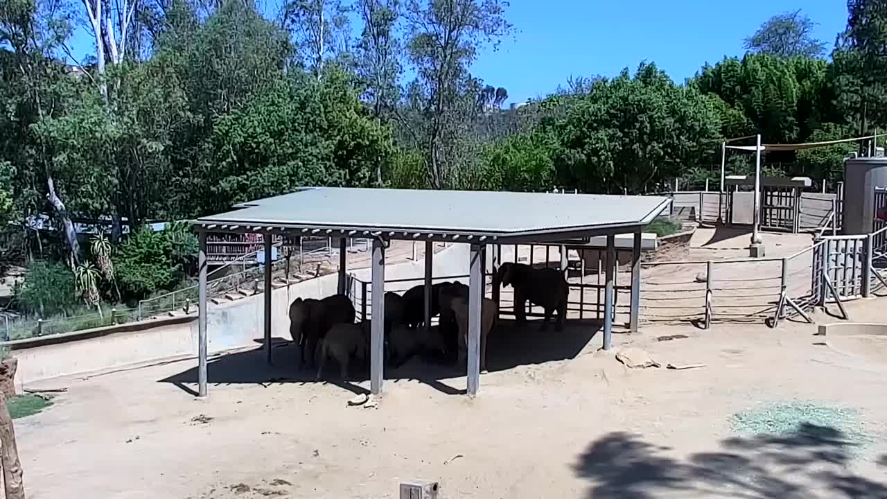 Webcam San Diego Wild Animal Park Elephants